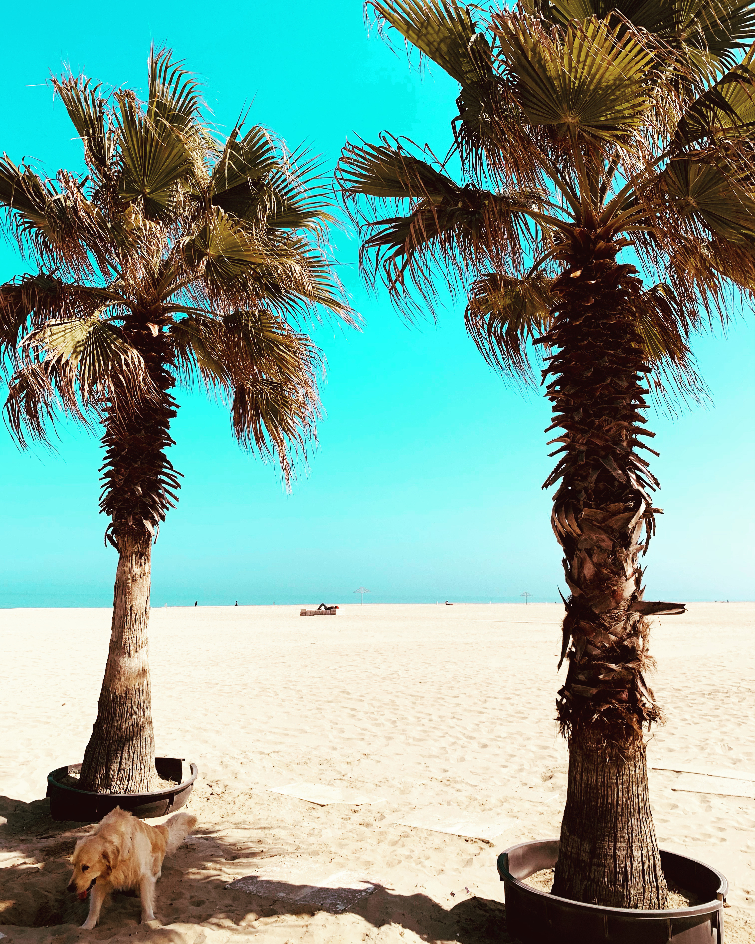 Rimini vacanze al mare